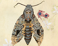 greater death's head hawkmoth and peanut butter tree