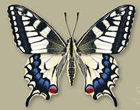 EntomologicalScientific Illustration