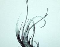 vecchie meduse degli abissi