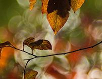 Autumn windows of nature