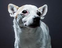 Dog Portrait - Yoshi
