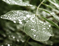 Photography: Nature - Rainy Day