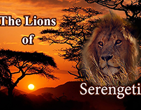 """""""A Realm of the Lions"""""""