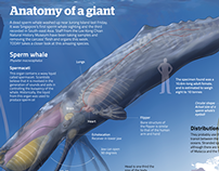 Anatomy of a giant