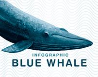 Infográfico: Baleia-Azul
