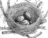 The Nest (stippling work)