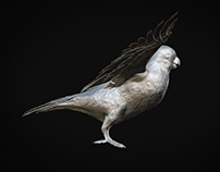 PARROT HIGH POLY