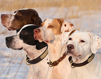 Bird Dogs & Field Trials!
