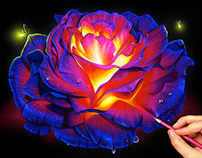 Glowing Rose