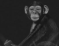 Animal Portraits - Chimp