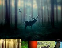 "Photoshop ""Deer and Hawk"""