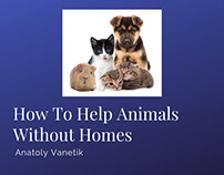 How To Help Animals Without Homes