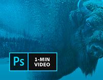 Adobe Creative Cloud 1-minute video tutorials