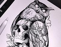 Owl drawing. Procreate