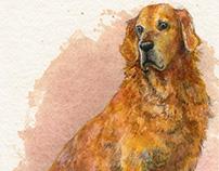 Commission: Pet Portraiture