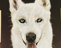 White German Shepherd portrait