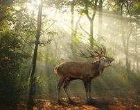 Deer in the morning light
