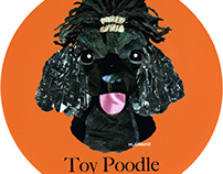 043 | Toy Poodle (Black)