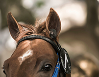 It´s not about winning • Equine photography