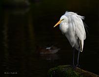 八景水谷の野鳥たち WILD BIRDS IN HAKENOMIYA, KUMAMOTO CITY