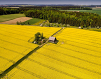 Rapeseed in the afternoon sun #aerial