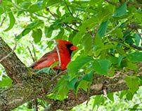 Birds - Grindstone Marsh Trail