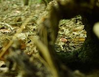 Toadstool through a Hollow Log