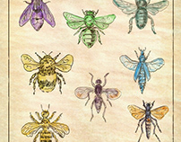 Vintage Bees and Flies Collection on Antique Paper