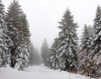 Grand bois du Pilat sous la neige