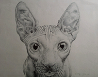 Sphynx Cat by MMPuhinger Hiperrealismo