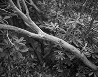 Vegetation BW