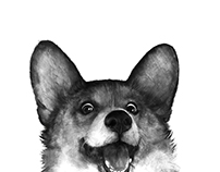 Corgi black and white dog