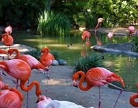 San Diego Zoo & Aquarium, CA