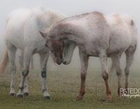 Chevaux dans la brume/Horses in the mist