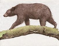 Bear Up