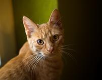 2017-05-05 - Katzenshooting Auge und Nummer drei
