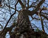 Facetten eines Baumstamms / Facets of a tree trunk