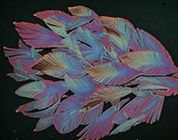 Foam board Feather