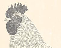 Heritage Chicken Illustrations