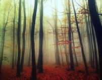 Autumn's last embrace
