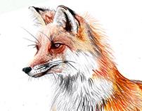 kolejny zwierz :)