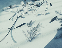 Sadness spread on the snowland|Photography