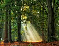 Rays of Light