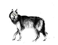 Mama draw me a Wolf