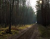 Leśne ścieżki/ Forest paths - part 2