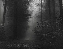 Misty morning in the woods B&W