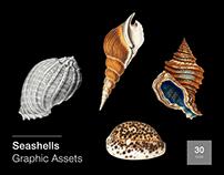 Seashells: 30 Graphic Assets