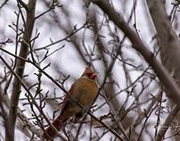 Cardinals & Jays