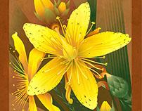 Garth Glazier: Botanicals