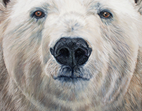 Polar Bear - 2017
